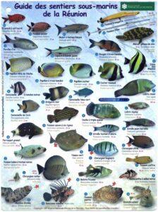 Fiche descriptive des différents poissons présents dans le lagon